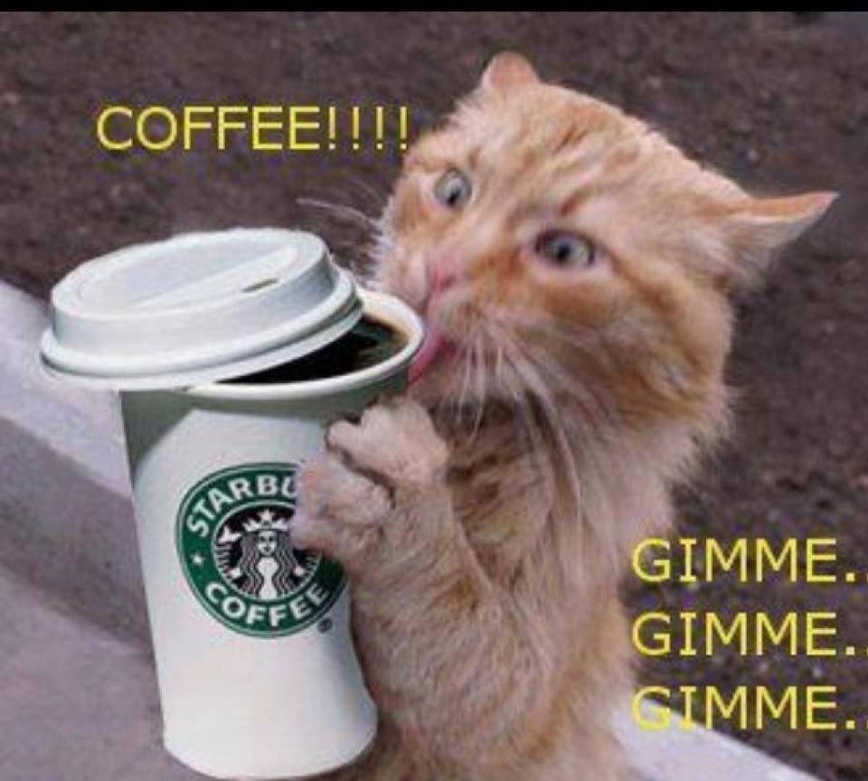 I drink too much coffee fun pinterest coffee