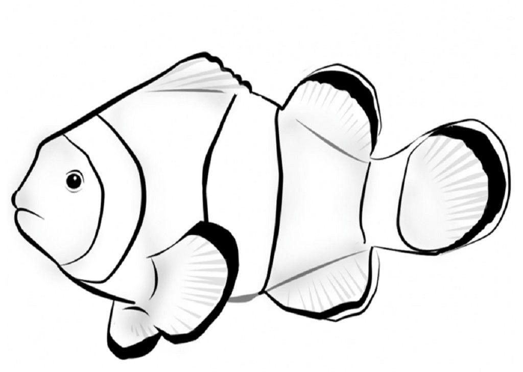 Fish Color Page For Kindergarten Pez Payaso Peces Dibujos