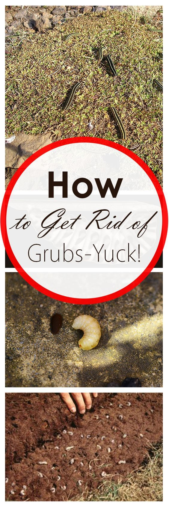 How To Get Rid Of Grubs Yuck