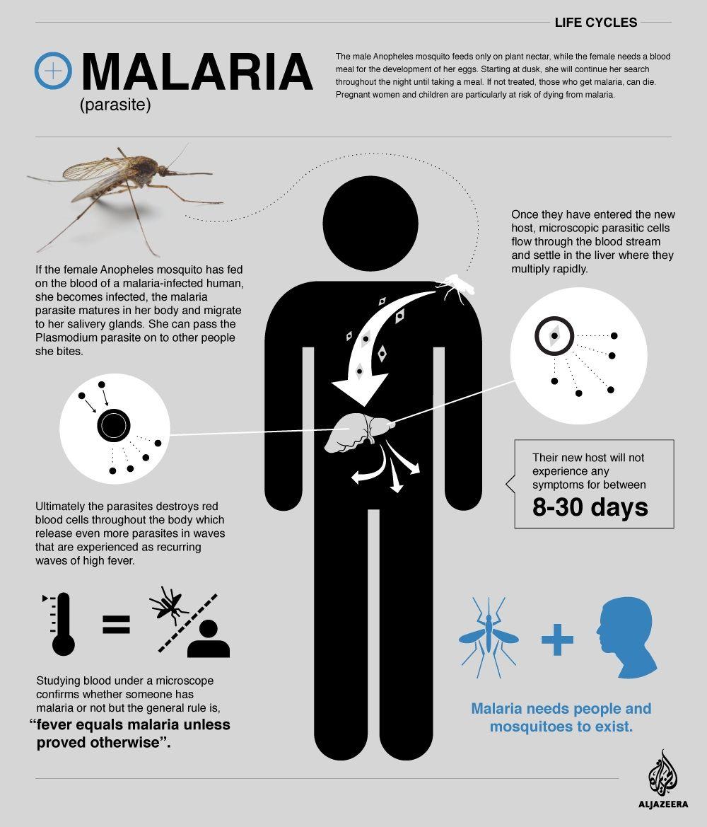 malaria infographic aljazeera jpg times malaria malaria infographic aljazeera jpg