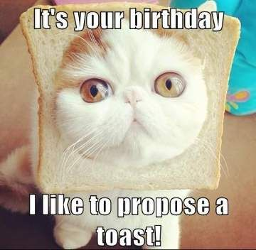 Propose A Toast Funny Happy Birthday Picture Funny Happy Birthday Pictures Happy Birthday Meme Happy Birthday Pictures