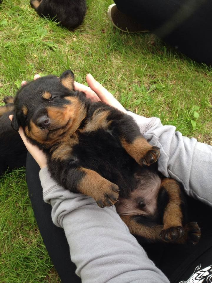 Baby Rott.....photo by Michelle Leslie