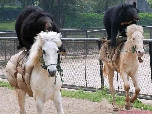 Mientras en Rusia... (IV) Russia horses and beards
