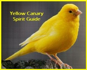 Animal Spirit Guide Yellow Canary With Images Canary Birds