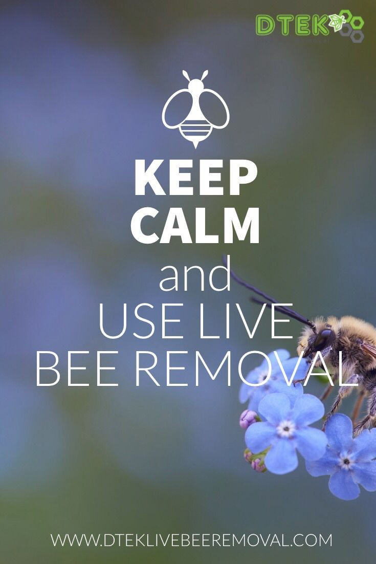 Contact the bee removal professionals at dtek live bee