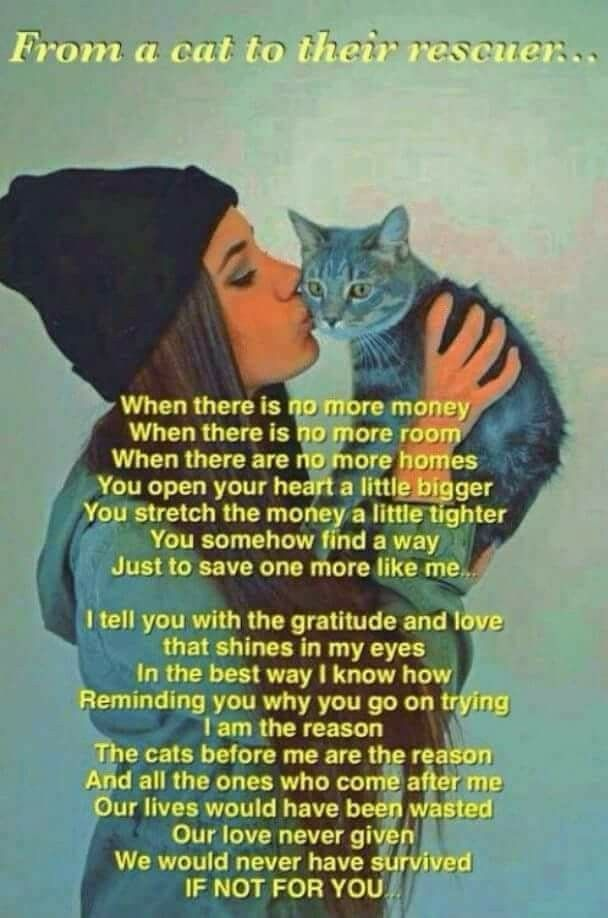 Pin by Angel Seeker on ANIMAL ADVOCACY Feral cats, Cats