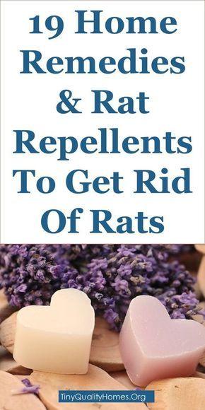 Black Pepper And Rats