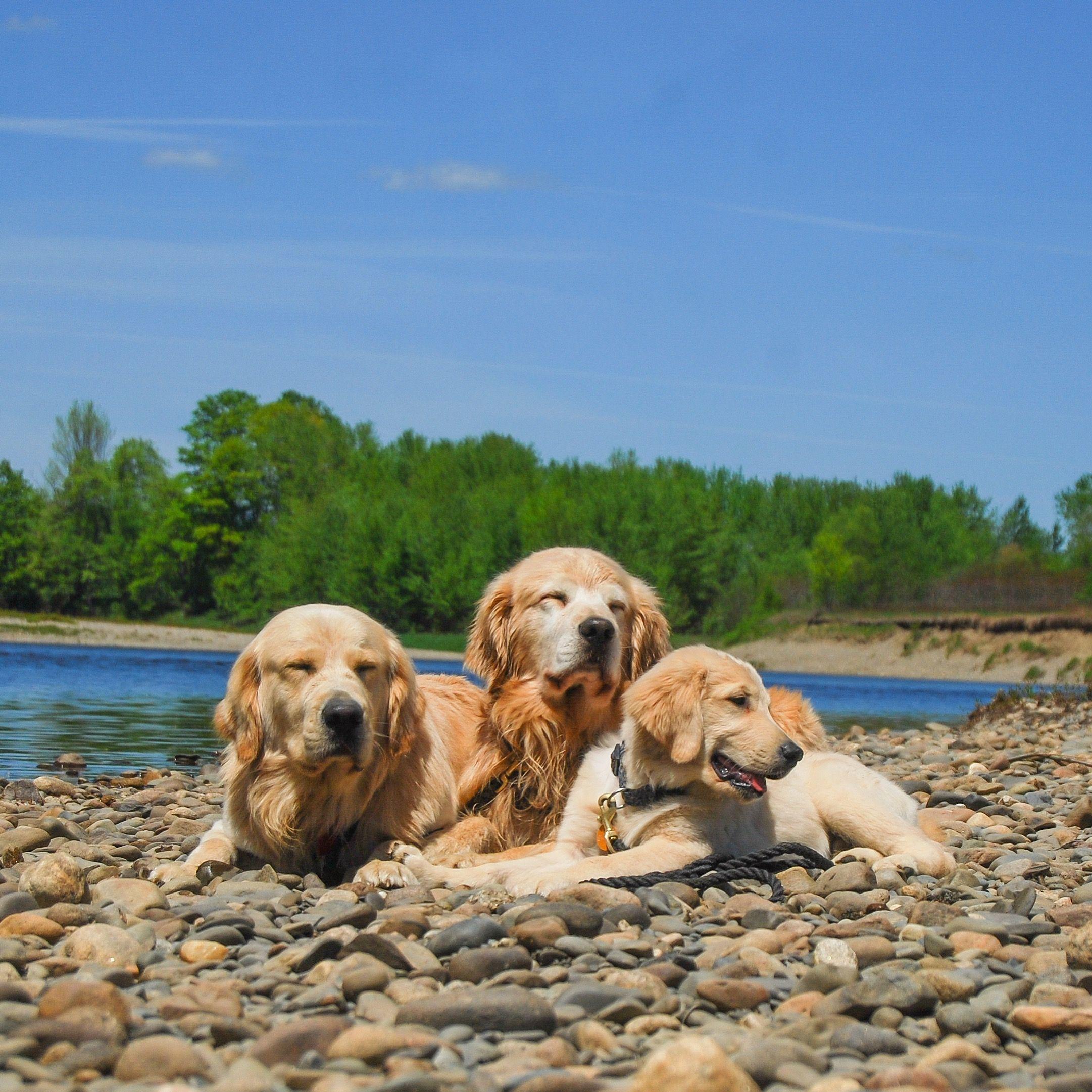 Pin By Liliana Nicoleta Chira On Dogs Caini Caini