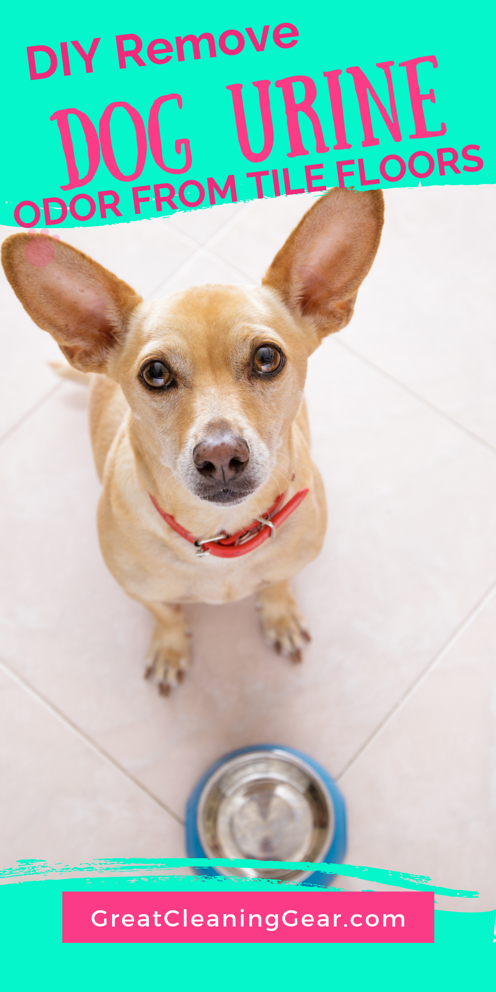 Dog Urine Odor From Tile Floors