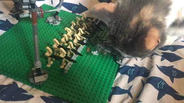 Cat Vs The Clankers Legostarwars Cats Lego Star Wars Clone Trooper
