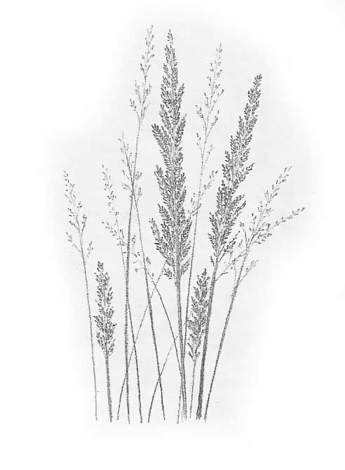 tall grass drawing | Art & Drawing | Pinterest | Drawings ...