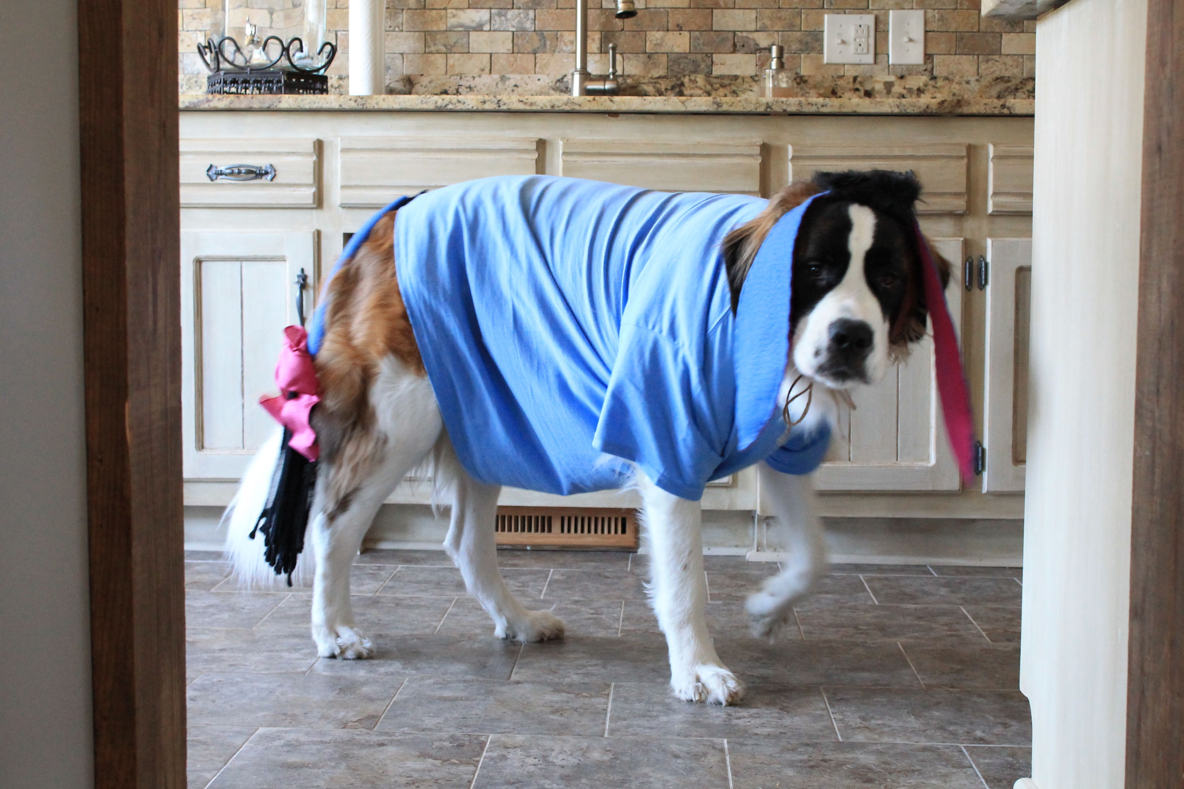 Saint Bernard Halloween Eeyore St Bernard Dogs Dog Halloween