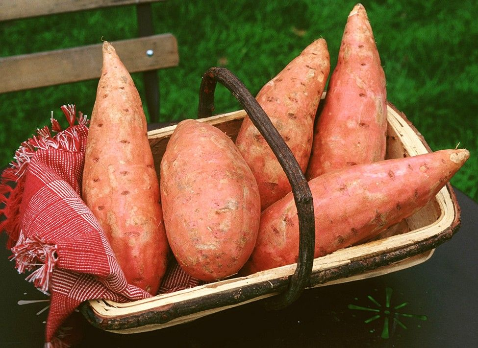 Comment cultiver la patate douce en pleine terre en 2020
