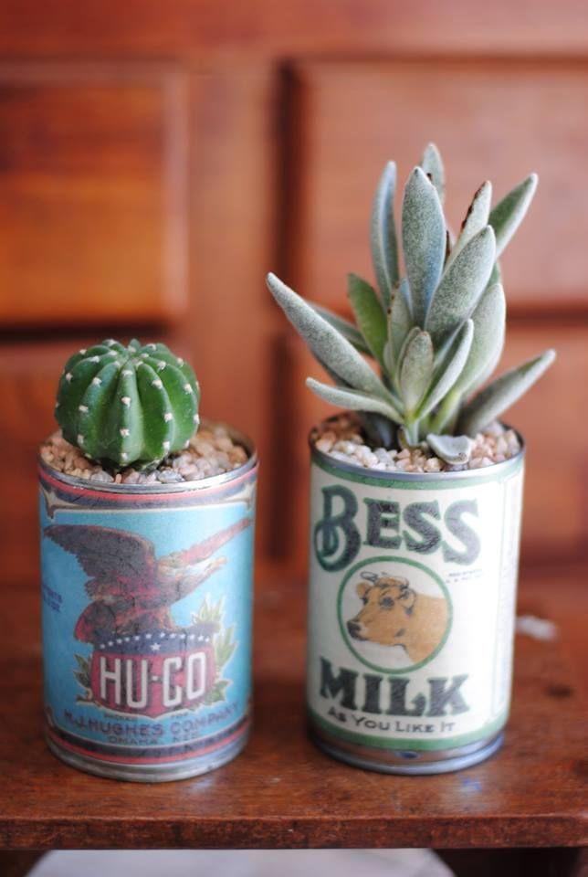 cactus y suculentas en latas recicladas con etiquetas vintage. las