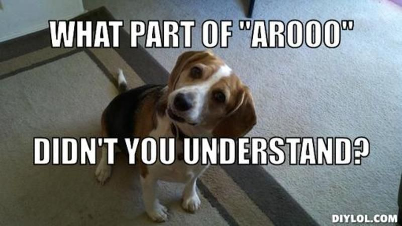 Funny Dog Meme Generator : Beagle meme resized back talk generator what