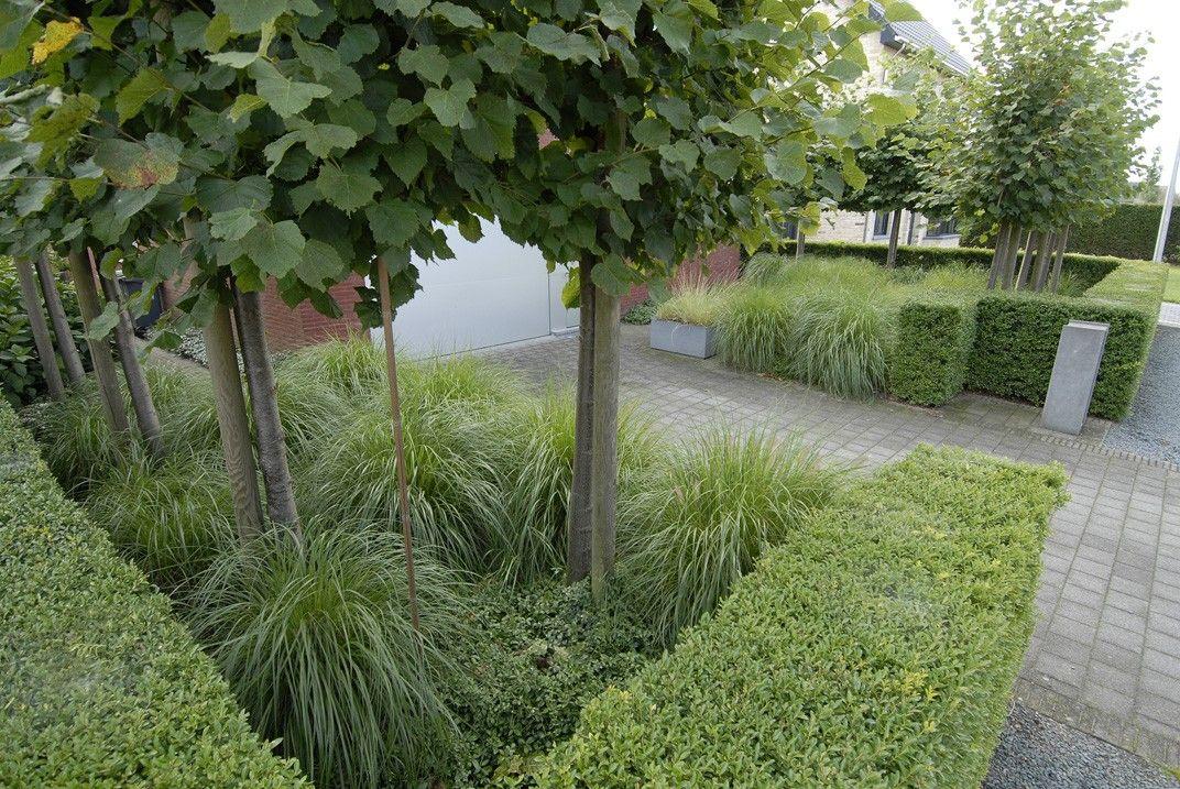 hagen ilex crenata dark green tuin pinterest. Black Bedroom Furniture Sets. Home Design Ideas