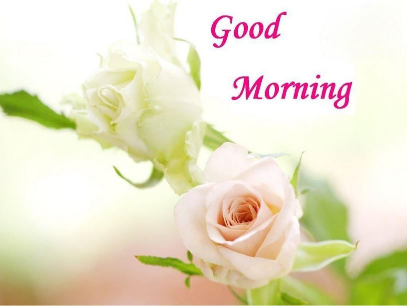 Beautifulgood Morning Images For Peaceful Start Of The Day Page 4 Good Morning Beautiful Flowers White Roses Wallpaper Flower Wallpaper