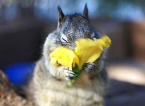 squirrell's can be cute too