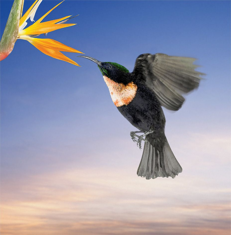 꽃과 새 - 꽃 주위를 날아다니는 새