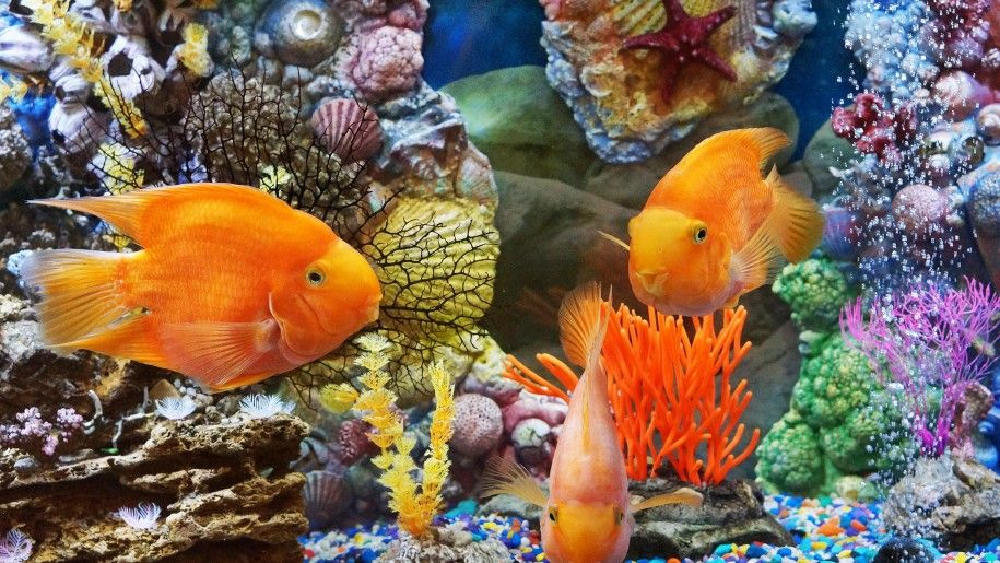 Underwater World Tropical Fish Desktop Background Hd Fish Wallpaper Underwater World Tropical Fish
