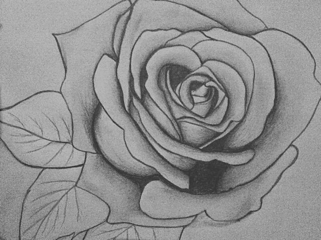 Pencil drawings of roses drawings of roses and by gentle pencil strokes easy pencil drawings
