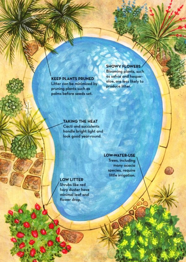 Some Basic Tips For Landscaping Around An Inground Swimming Pool Inground Pool Landscaping Backyard Pool Landscaping Pool Plants