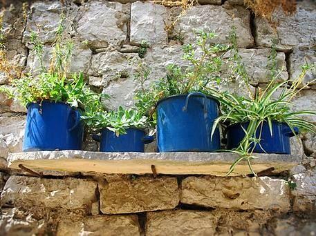 Plants in Blue Pots