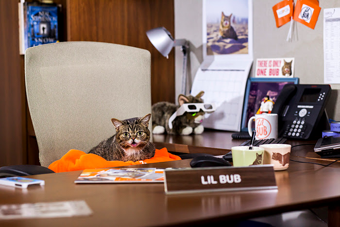 """Lil Bub is """"CEO for a day"""" at the ASPCA!"""