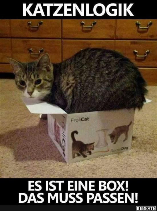 katzenlogik lustige bilder spr che witze echt lustig katzen pinterest katzen lustige. Black Bedroom Furniture Sets. Home Design Ideas