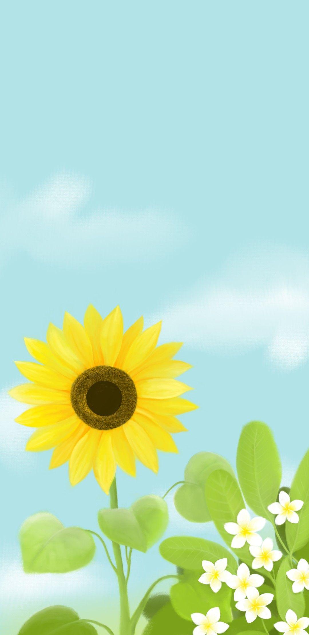 دوار الشمس Sun Flower Plants