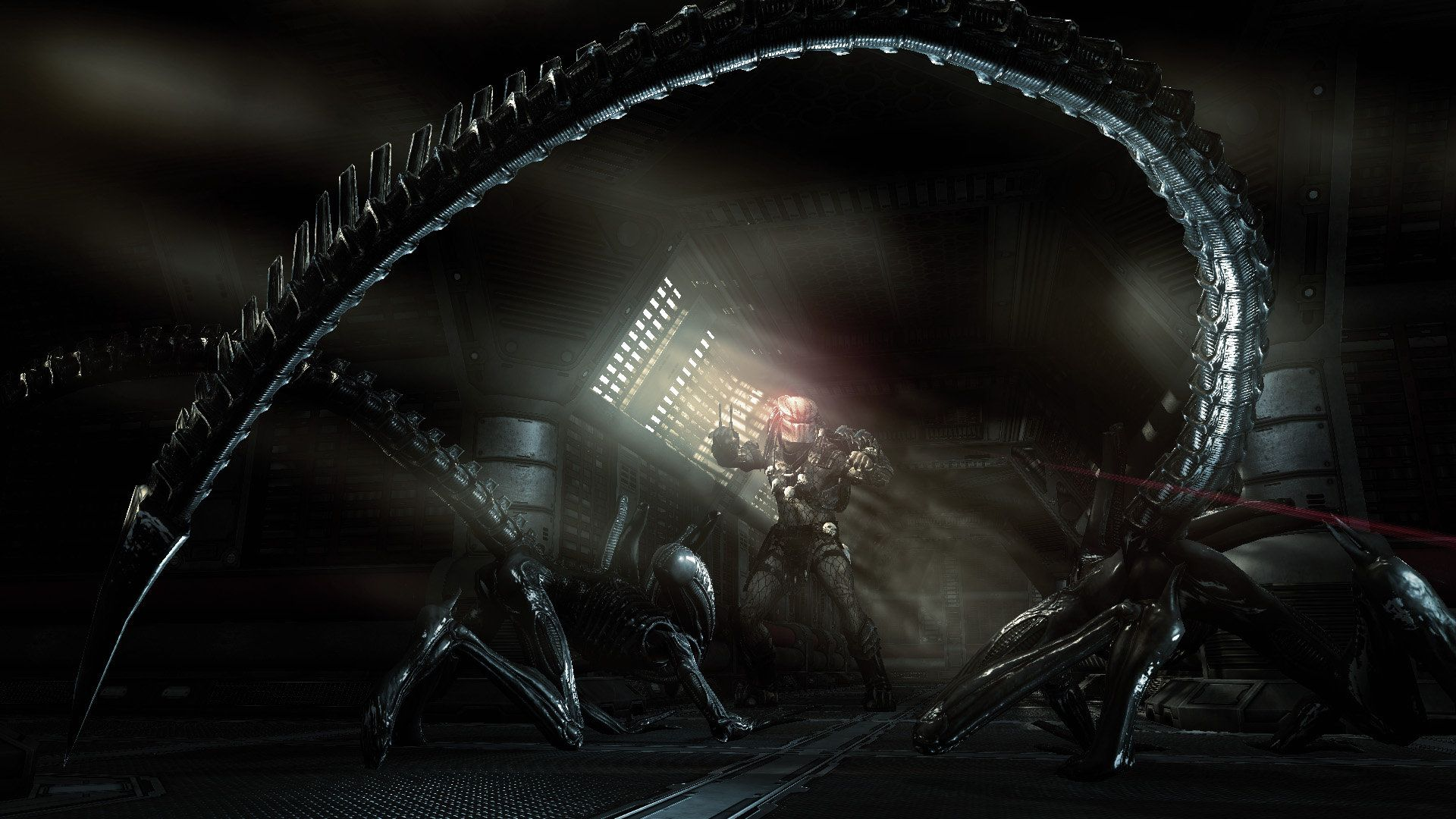 Aliens Vs Predator Extinction 3d Game Wallpaper Online