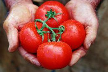 Is Fish Oil A Good Fertilizer For Tomato Plants With 400 x 300