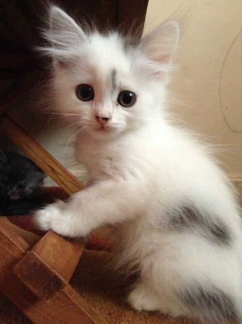 Cute Pictures Of Baby Animals To Draw Hauska Kissa Kitties Kissanpennut