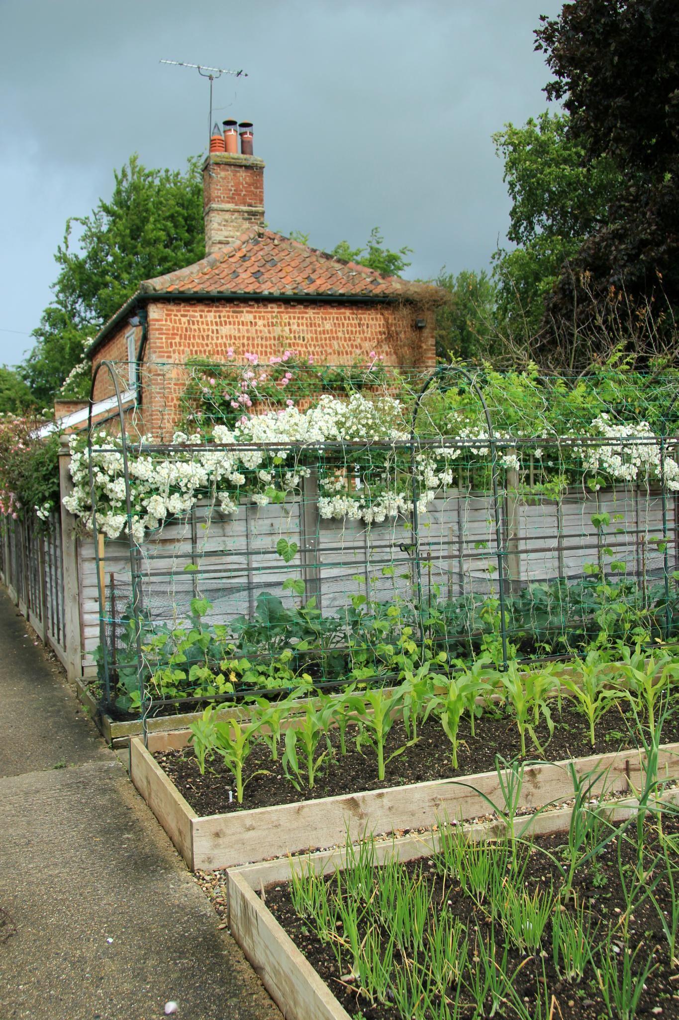 chippenham park gardens 24 06 2012 garden potager. Black Bedroom Furniture Sets. Home Design Ideas