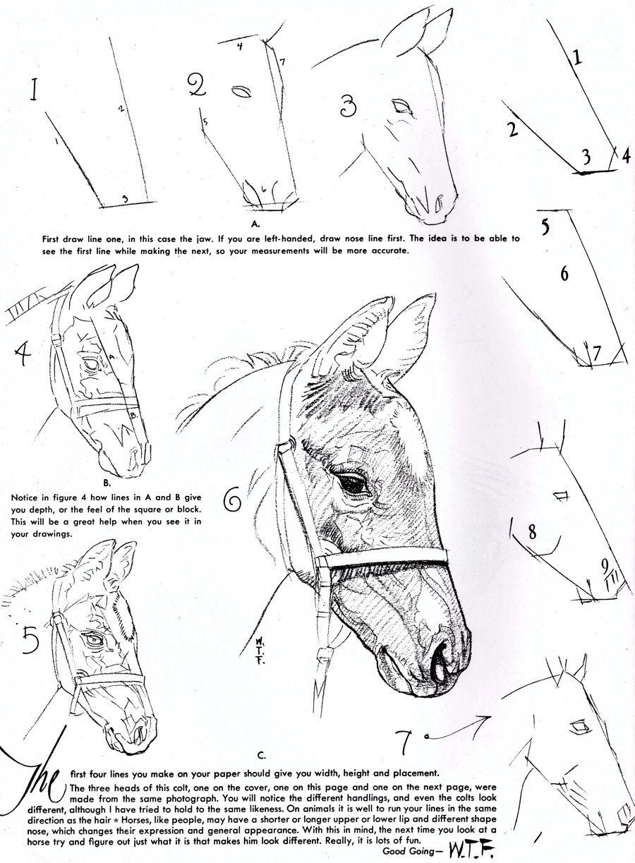How to draw horses | Horse art 4 | Pinterest | Dibujo, Caballos y ...