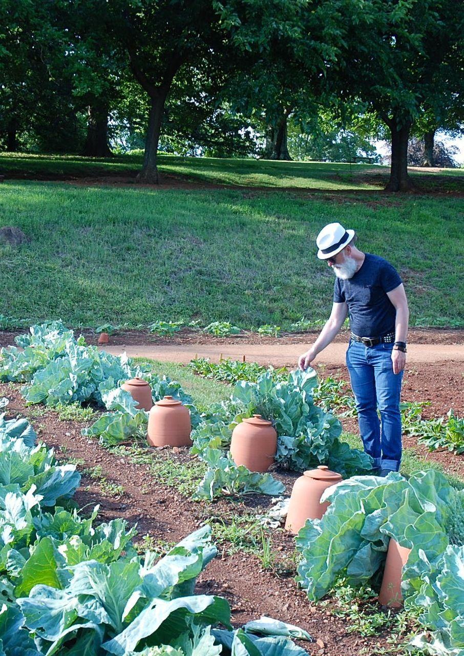 Steven in the Monticello kitchen garden. Charlottesville, Virginia ...