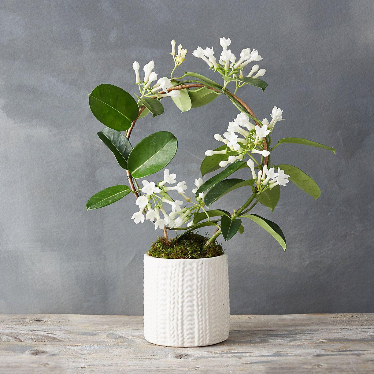 madagascar jasmine hoop sweater pot wish list jasmine. Black Bedroom Furniture Sets. Home Design Ideas