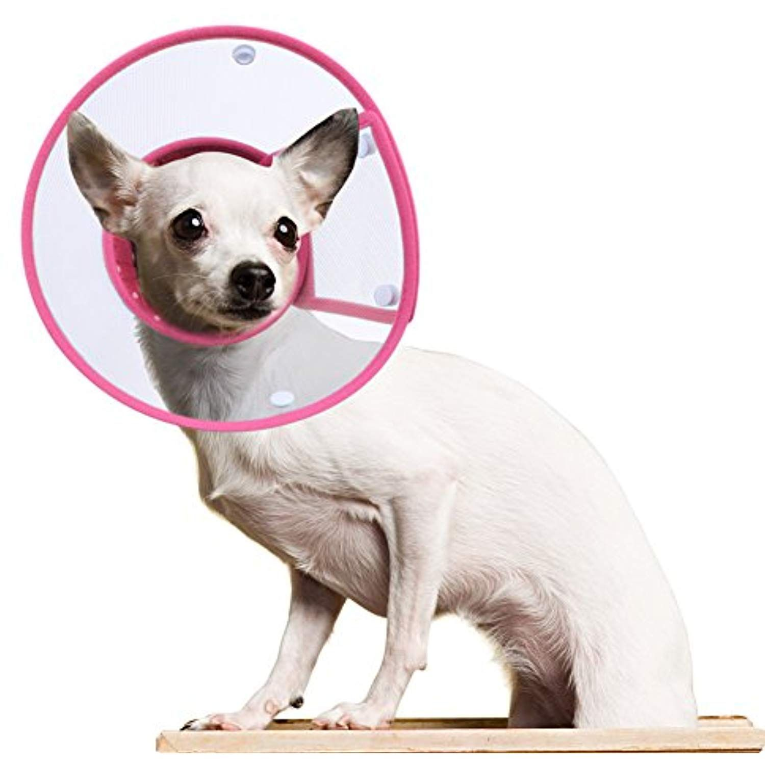 Petbaba Recovery Collar Cone Clear Soft Padded Tiny Adjustable Comfortable Elizabethan E Collar For Surgery Remedy Groo Dog Cone Cats And Kittens Dog Shedding