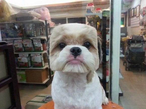 """florian.min.js on Twitter: """"TIL there is a trend in Japan/Taiwan to shave your dog to look like a cube. http://t.co/zAPH6FdJBZ"""""""