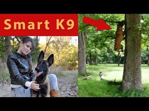 Belgian Malinois Amazing Training And Agility Youtube
