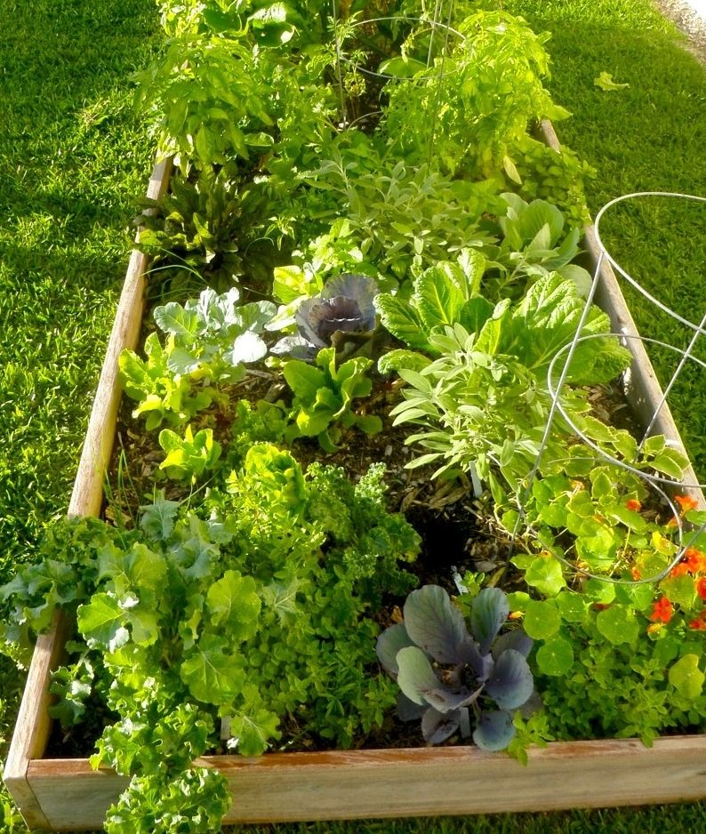 Edible gardens in south florida vegetable gardens - South florida vegetable gardening ...