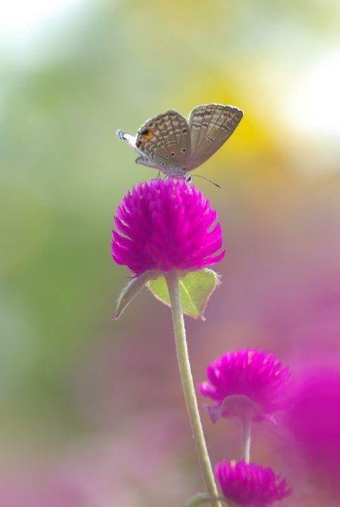 Orchid Blue Flowers Beautiful Butterflies Flower Butterfly Hd