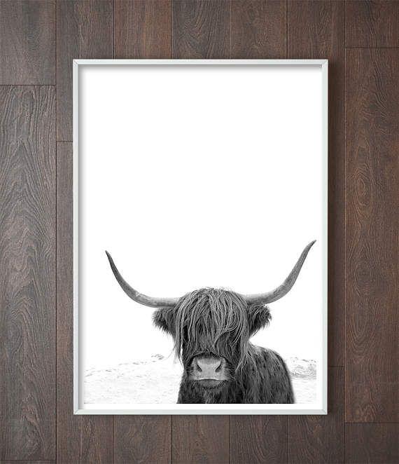 Highland cow art animal print black and white photography cow photo animal photography bison print buffalo print