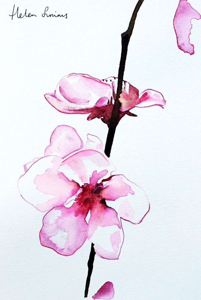 Watercolour Orchid Painting By Helen Simms A4 By Helenillustration