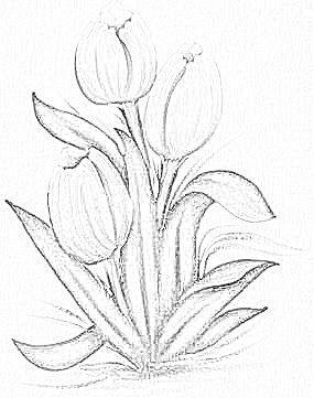 risco de tulipas para pintar
