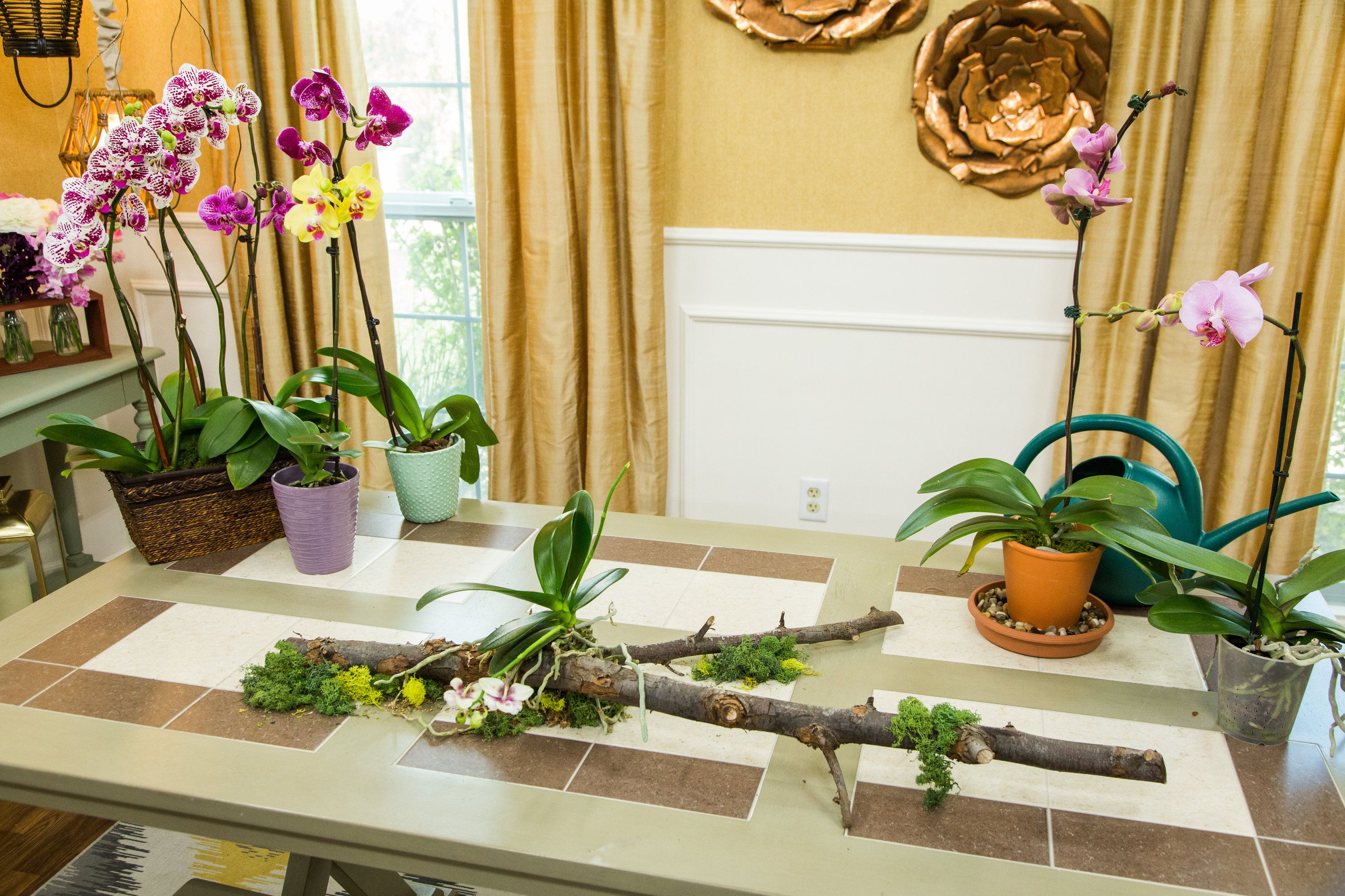 Edenmakersblog is helping you take care of your orchids donut miss