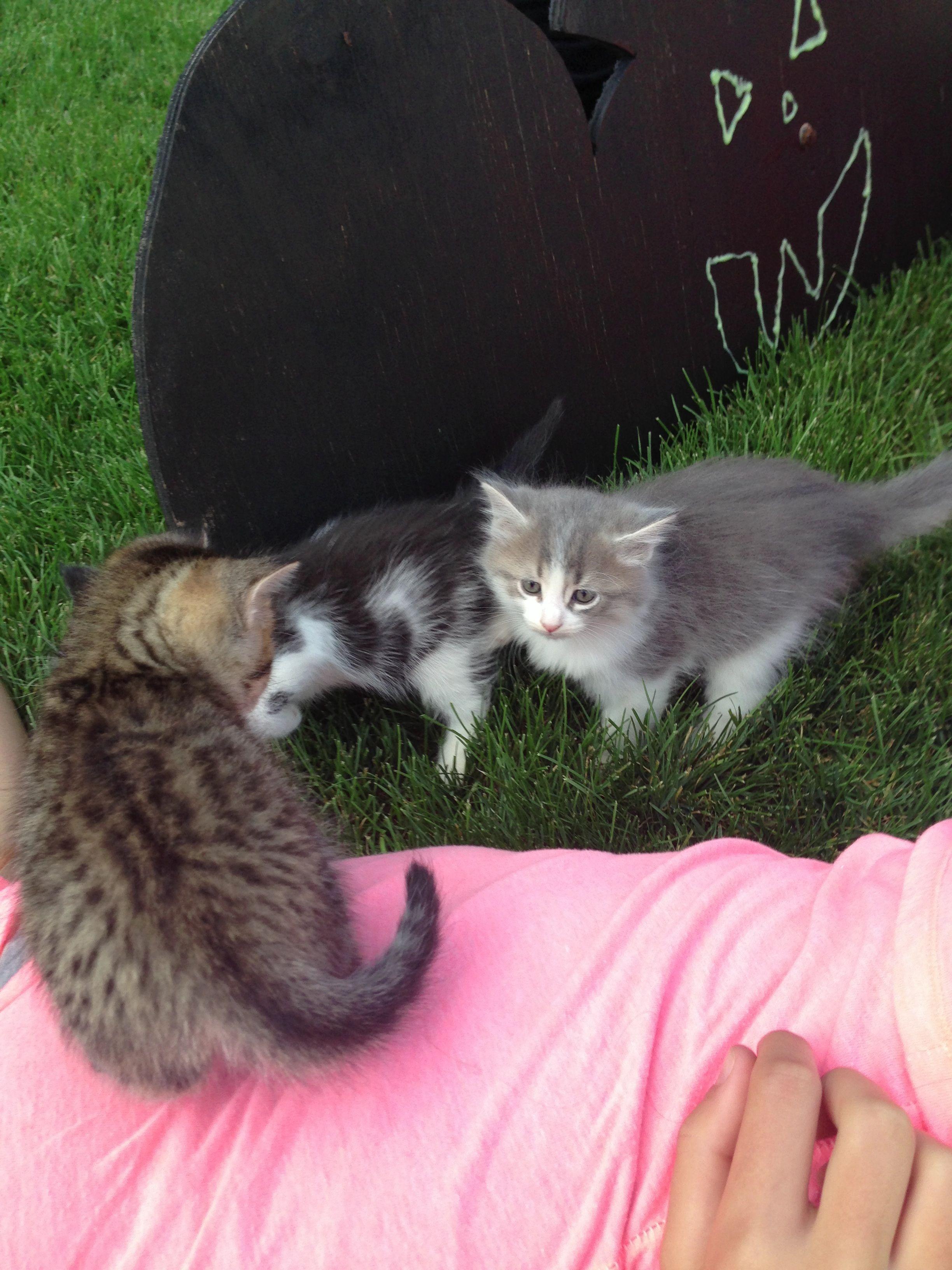 Baby Kittens Baby Kittens Kittens Animals