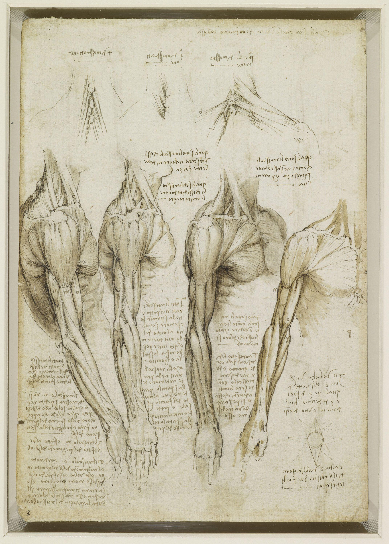 Science and inventions of Leonardo da Vinci: Wikis