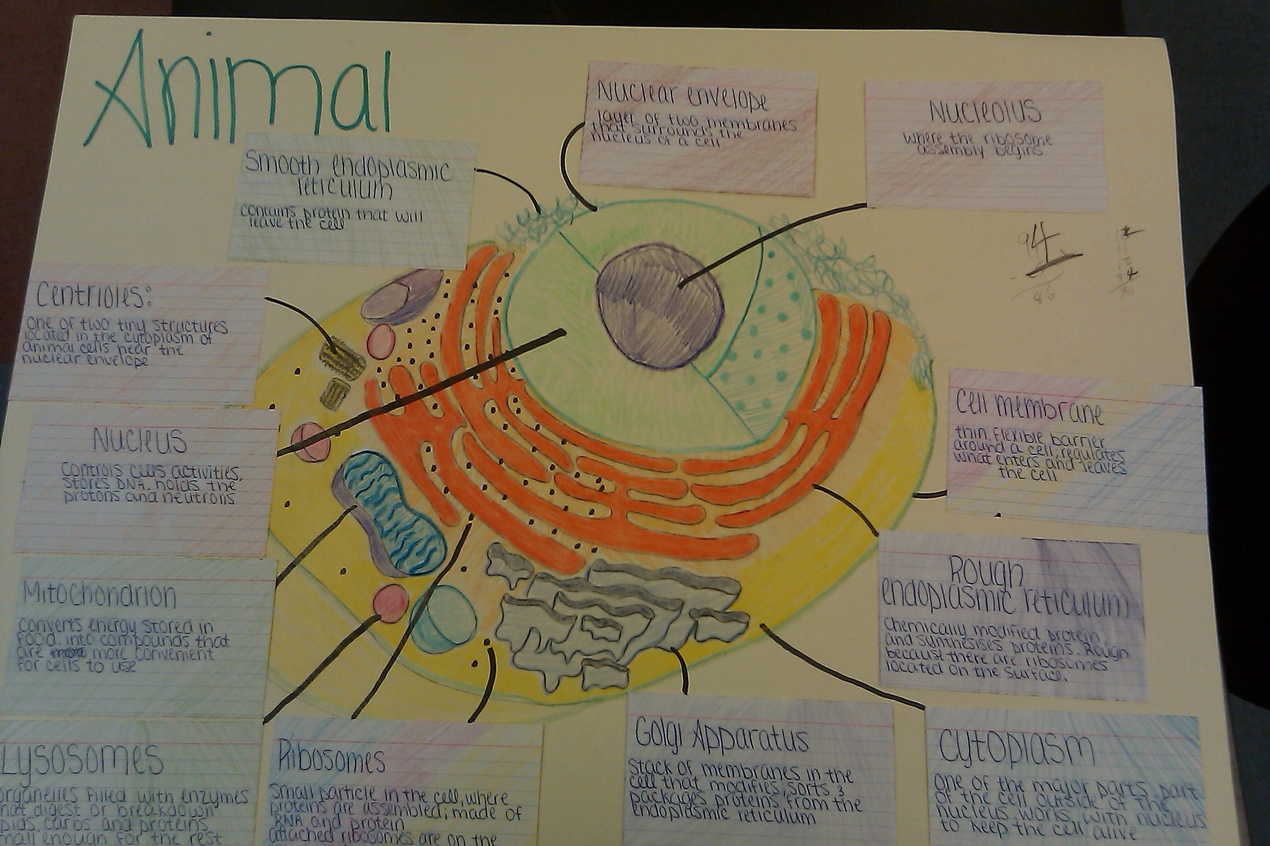 Cell Structure And Function Poster Ideas