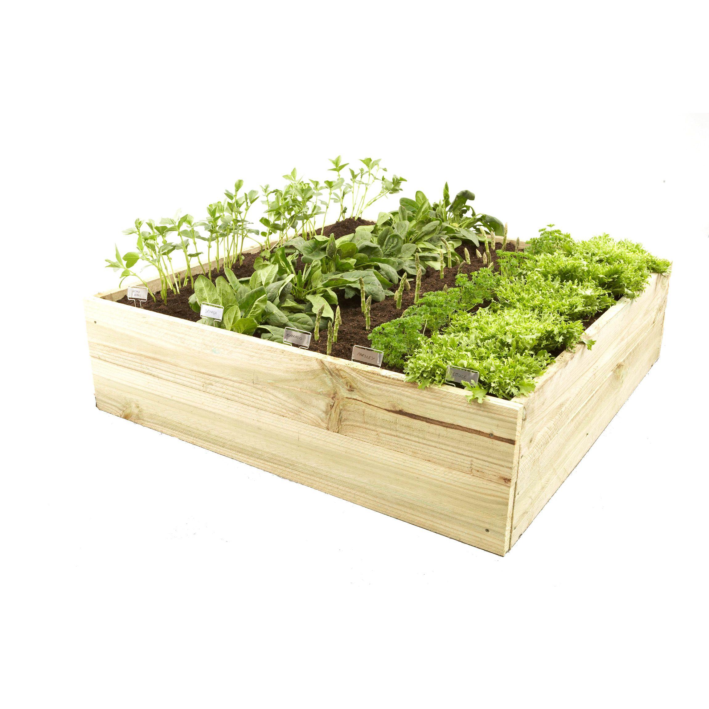 Lotus Treated Pine Raised Timber Garden Bed